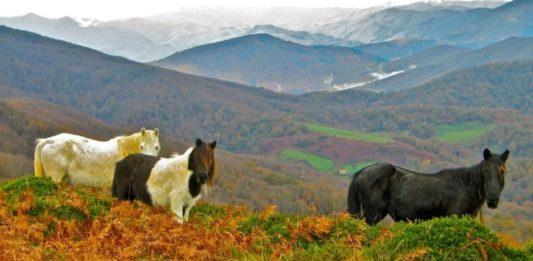 Una vista del Valle del Batzan (Euskadi) donde se han encontrado relaciones genéticas directas entre sus pobladores actuales y los de hace 15.000 años