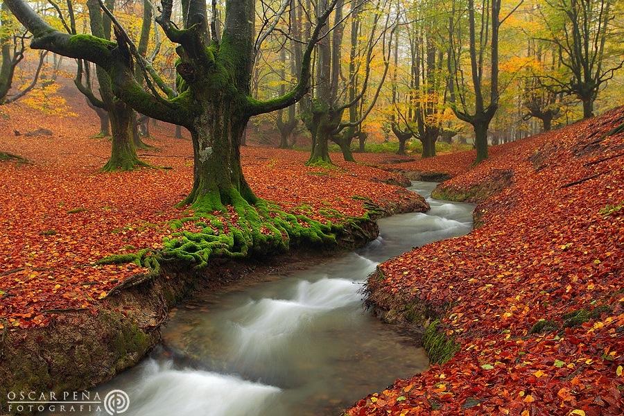 Basque-Forest