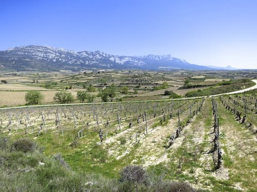 Vineyards-in-the-Rioja-region