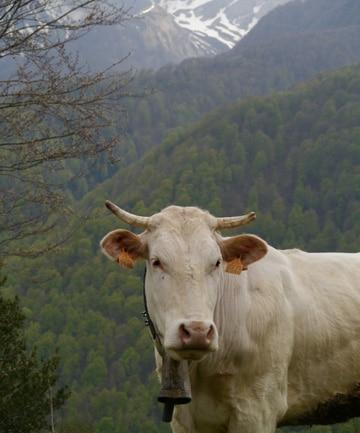 vaca-vasca.stuff