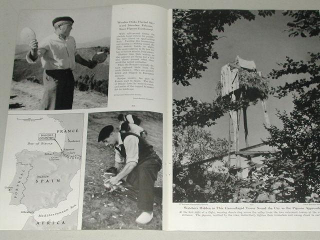 revista-caza-palomas-1949-2
