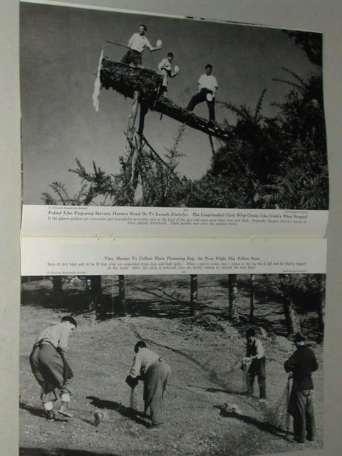 revista-caza-palomas-1949-3