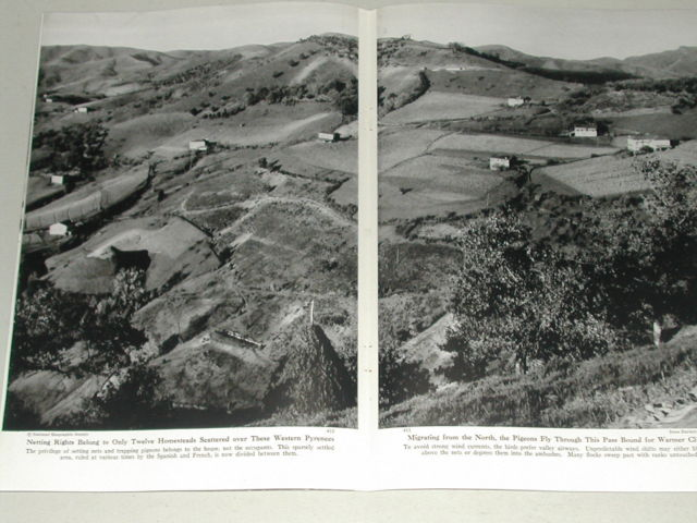 revista-caza-palomas-1949-4