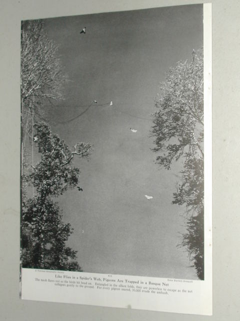revista-caza-palomas-1949-7