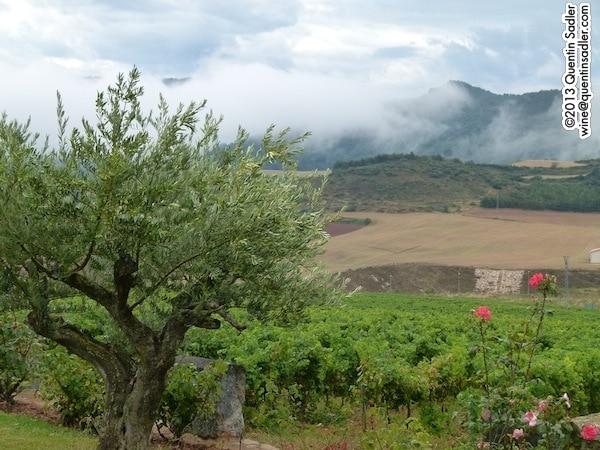 """Vistas de viñedos en """"Tierra Estella"""" (fotografía: Quentin Sadler)"""