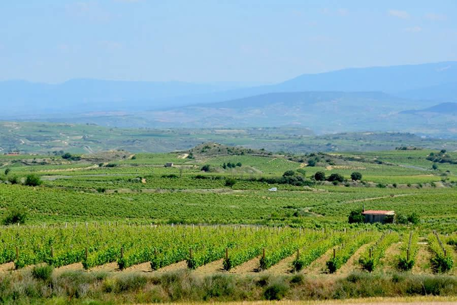 Our next wine-tasting stop was the Bodega Ostatu in the town of Samaniego. Ostatu is a family-owned winery that's also eco-friendly and carbon neutral. (Vistas desde las Bodegas Ostatu)