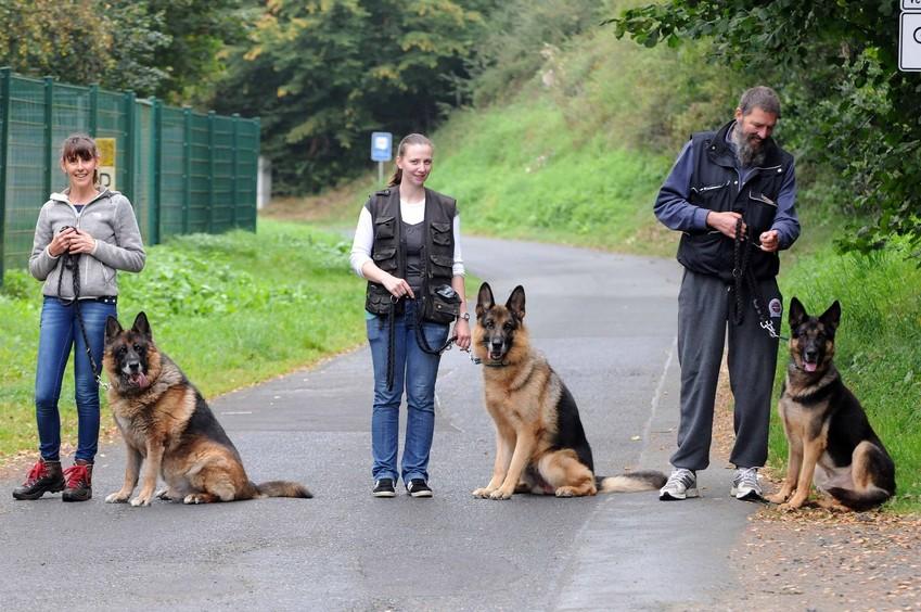 """Tres de los """"perros policía"""" que trabajaron en Bilbao y que han sido salvados desde Alemania"""