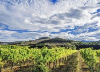 Never heard of Navarra wines? This overlooked Spanish region is a gem. (surogati / iStock)