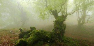 Hayedo de Otzarreta -Gorbeia (Foto- Shutterstock)