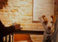 Dog vivant. Disfruta del ocio en compañía de tu perro