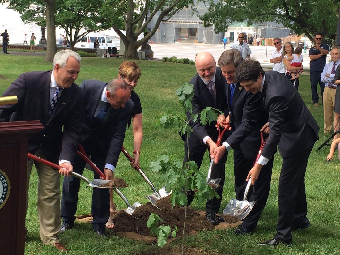 Plantando un retoño del Árbol de Gernika en Washigton