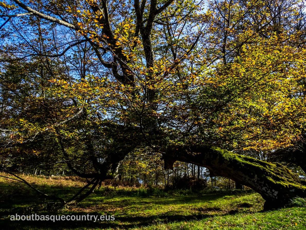 Una de las dos mayores masas forestales autóctonas del Continente, se vuelve un lugar mágico en otoño