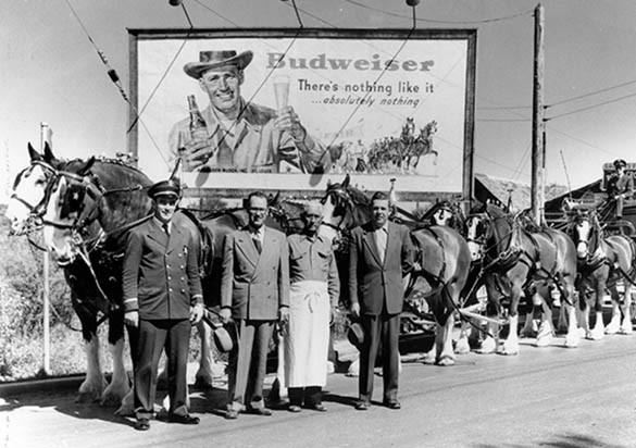 Budweiser eta EEBBetako irudi ezagunenak: Clydesdales.